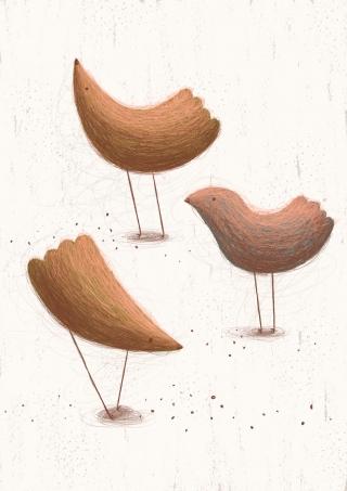 about_birds_1.jpg