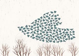 about_birds_3.jpg