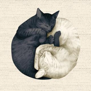 yingyang_cat_paski_minty-min (1)