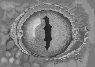 Gecko's eye - Study painted in Photoshop.jpg