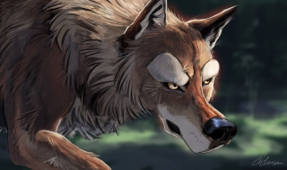 wolf_fin
