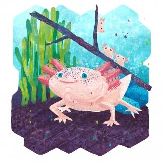 Axolotl - endangered species series
