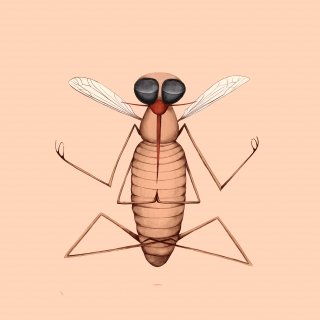very zen mosquito doing yoga