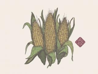 corn portfolio.jpg