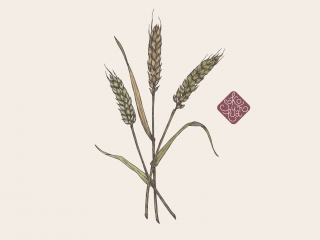 wheat portfolio.jpg