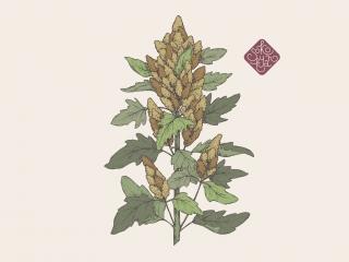 quinoa portfolio.jpg