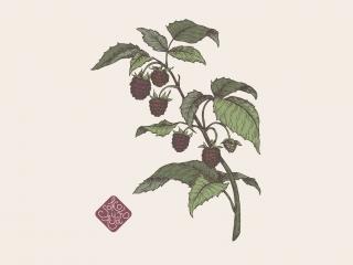 raspberry portfolio.jpg