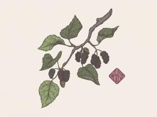 mulberry portfolio.jpg