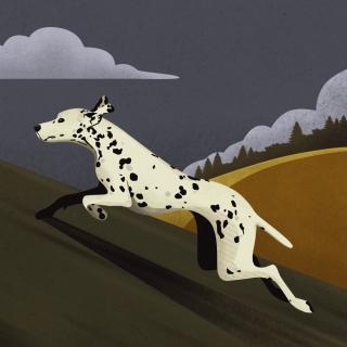 'dalmatian'.jpg