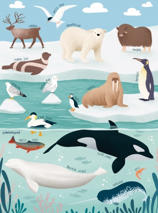 Arctic animals illustration.jpg