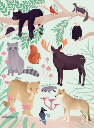 Forest animals illustration.jpg