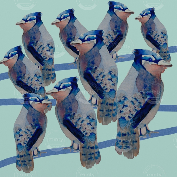Uccellini birds sitting on a wire