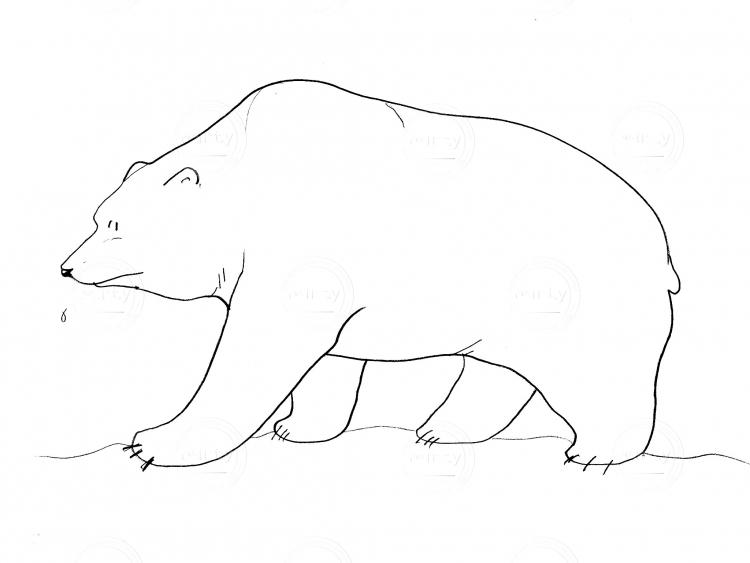 Simple bear walking