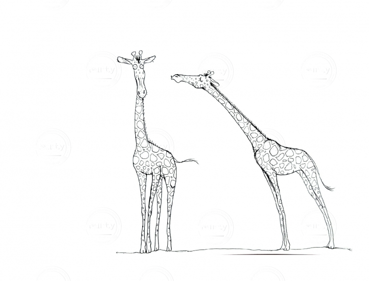 One giraffe tries to kiss the other one :)