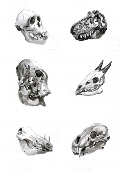 A collection of animal and dinosaur skulls