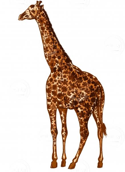 Giraffe on a white background