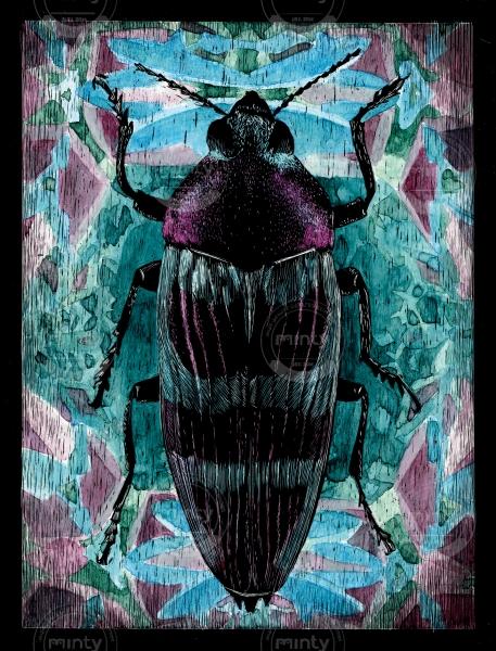 Coleoptera 03