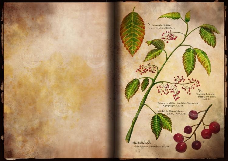 Traveller's book herbarium
