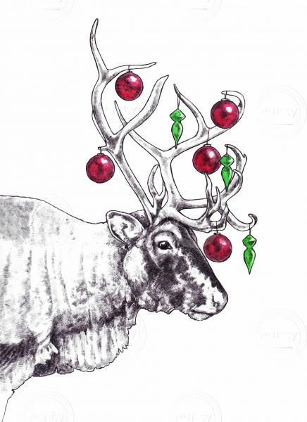 reindeer white background