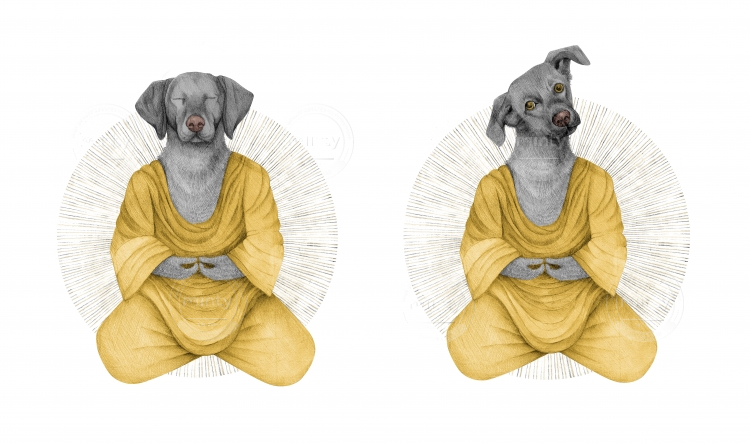 almost meditating dog in yellow