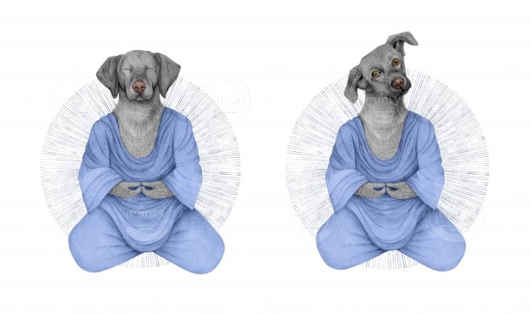 blue_dog_minty