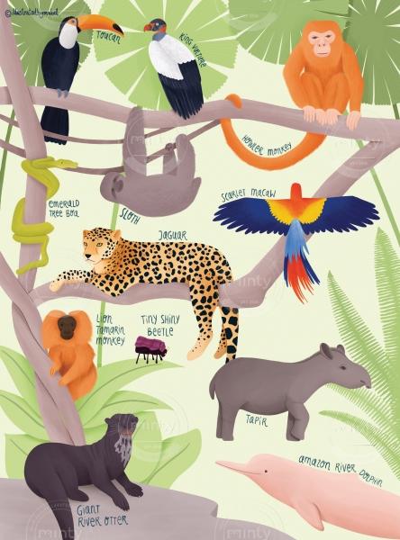Amazon animals illustration