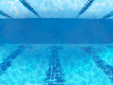 The white cat in the swim cap and swim glass is diving into the pool.gif