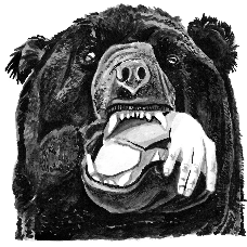 Brown Bear Illustration