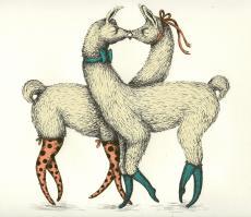 Llamas in Love